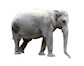 elephant-1113tm-pic-439